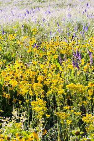 Yellow and blue wildflowers in full bloom in the mountains. Stock Photo - 21095610