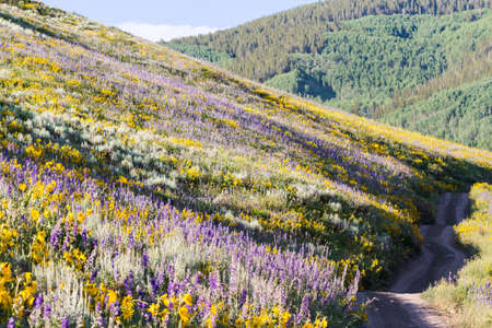 Yellow and blue wildflowers in full bloom in the mountains. Stock Photo - 21095686