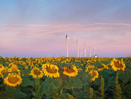 Wind turbines over a beautiful sunflowers field in Limon, Colorado. Stock Photo - 21590933