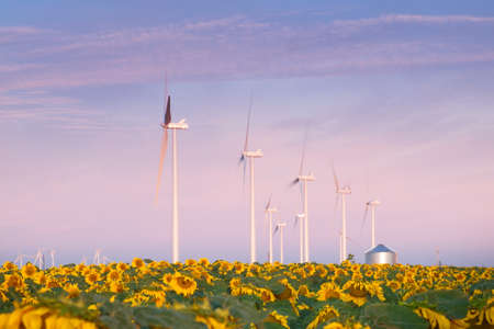 Wind turbines over a beautiful sunflowers field in Limon, Colorado. Stock Photo - 21590934