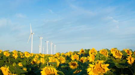 limon: Wind turbines over a beautiful sunflowers field in Limon, Colorado.