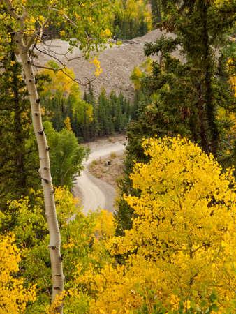Yellow aspens in autumn, Colorado. Stok Fotoğraf - 21945362