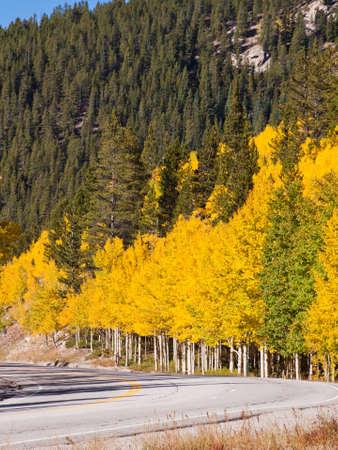 Brilliant fall colors adorn a country road in Colorado. photo