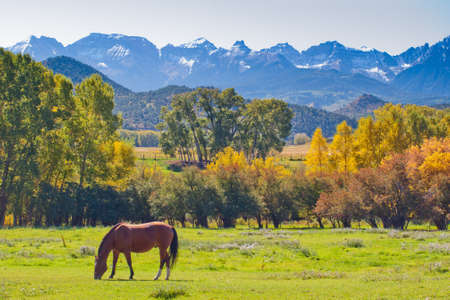 Horse pasture at the Double RL Ranch with a view of the Dallas Divide on the back.