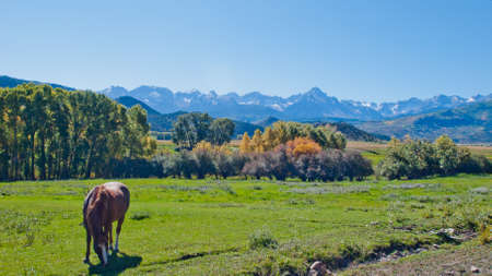 Horse pasture at the Double RL Ranch with a view of the Dallas Divide on the back. photo
