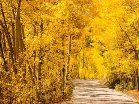 Mountain road on sunny Autumn day on Boreas Pass, Colorado. photo