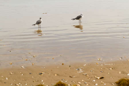 cameron county: Seagulls on the bach of South Padre Island. Stock Photo