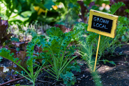 garden center: Organic urban garden in full growth at the end of the summer.