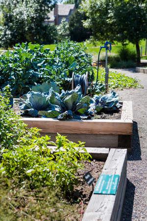 Organische stedelijke tuin in volle groei aan het eind van de zomer.