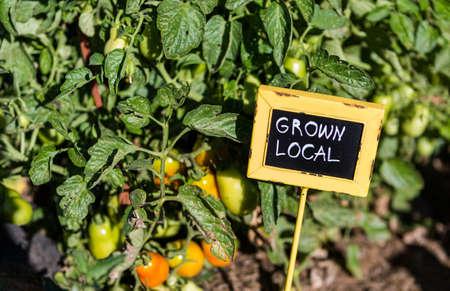 Fin de l'été dans la communauté organique jardin vegatable. Banque d'images - 31281535