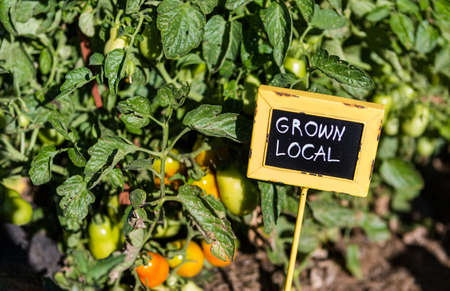 Spätsommer organische Gemeinschaft vegatable Garten.