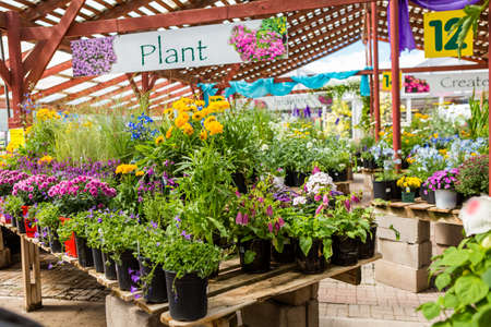 Plants in pots on sale at the local garden center. Editorial