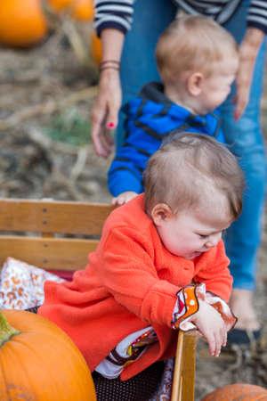 Choosing a pumpkin at a pumpkin patch on Fall day. Stok Fotoğraf
