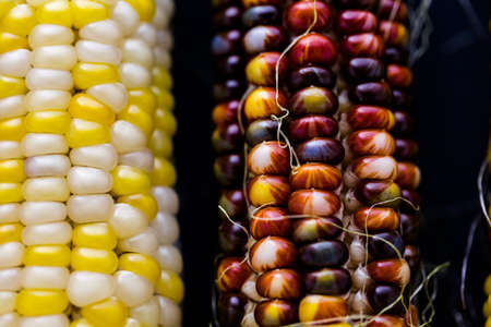 Multi colored indian corn made for Thanksgiving decoration.