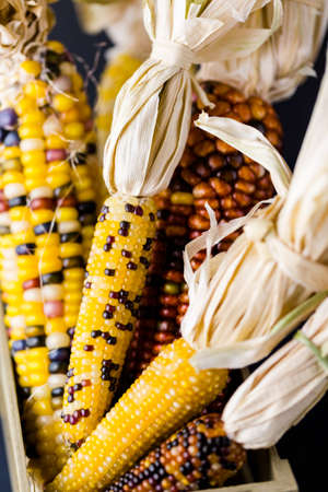 mealie: Multi colored indian corn made for Thanksgiving decoration.