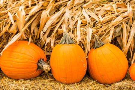 Pumpkin Patch auf sonnigen Herbst-Tag.