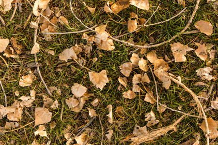 Brown leaves on green grass in late Autumn.