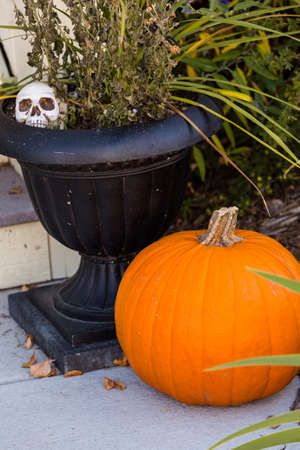 living skull: Residential house decorated for Halloween holiday.