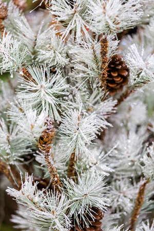fake christmas tree: Flocked Christmas tree with pinekones. Stock Photo