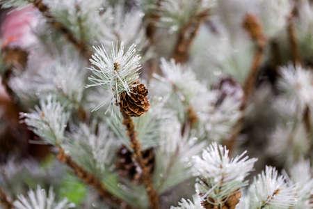 artificial lights: Flocked Christmas tree with pinekones. Stock Photo