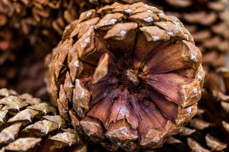 jeffrey: Pile of large pine cones in basket.