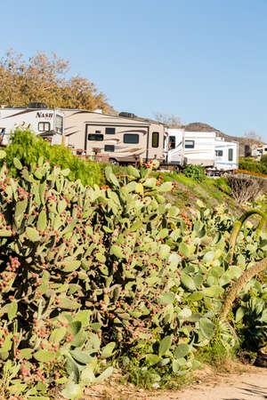 century plant: Malibu, California, USA-December 24, 2014. Winter RV camping on cost of California.