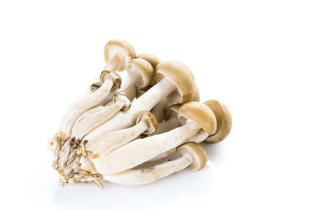 Organic brown beech mushrooms on a white background. Фото со стока