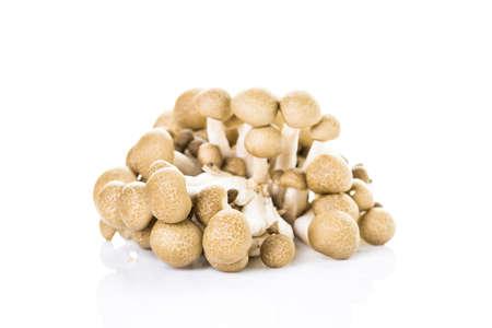Organic brown beech mushrooms on a white background. Reklamní fotografie