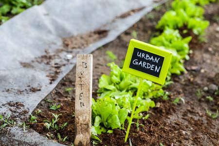 Early summer planting in urban garden.