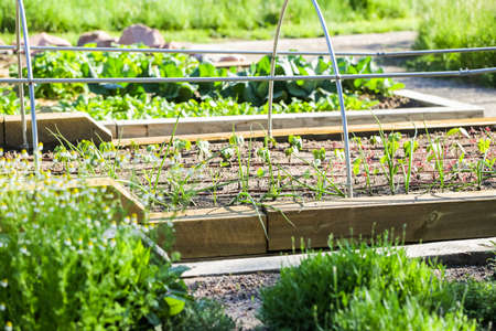 garden: Early summer in urban vegetable garden. Stock Photo