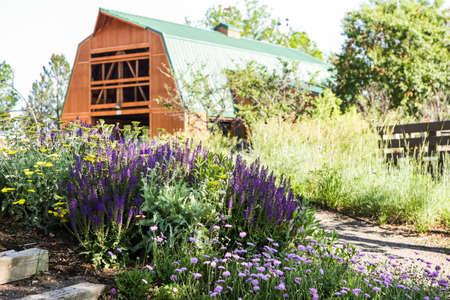 catnip: Early summer in urban vegetable garden. Editorial