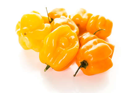 piperaceae: Habanero chili peppers on a white background.