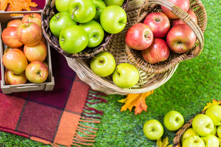 green apples: Freshly picked organic apples on the farm. Stock Photo