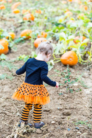pumpkin patch: Toddler in Hallooween costume playing at the pumpkin patch.
