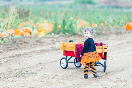 Toddler in Hallooween costume playing at the pumpkin patch.