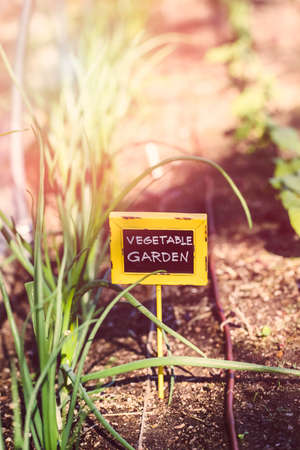early summer: Early summer in urban vegetable garden. Stock Photo