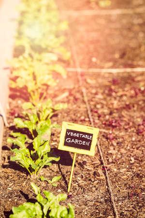 Early summer in urban vegetable garden. 免版税图像