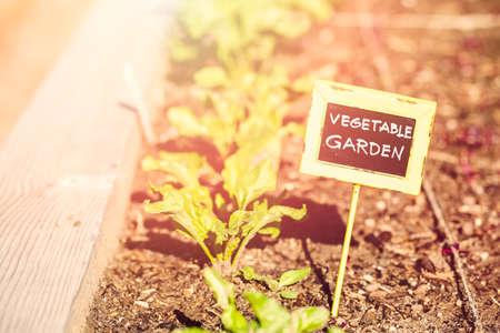 garden center: Early summer in urban vegetable garden. Stock Photo