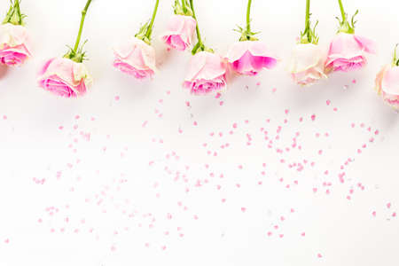 flower shape: Pink roses on a white bacckground. Stock Photo