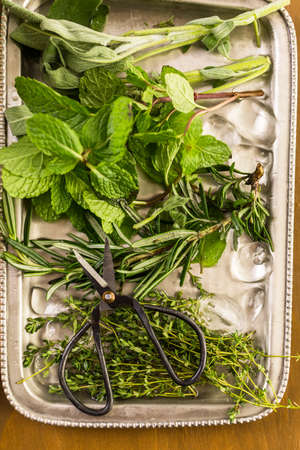 mode made: Tray with fresh mint, rosemary, thyme, and sage. Stock Photo