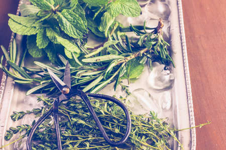 nad made: Tray with fresh mint, rosemary, thyme, and sage. Stock Photo