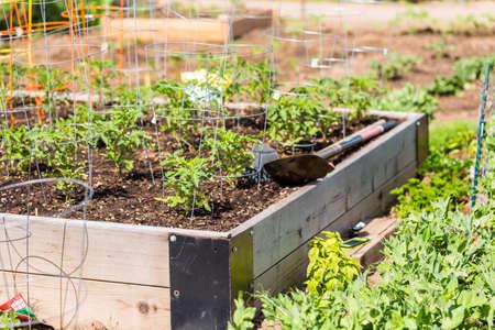 Organic vegetable community garden in early Summer. Stockfoto