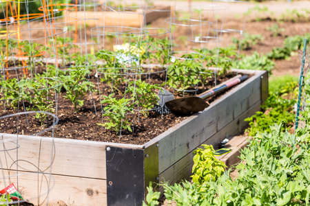 Organic vegetable community garden in early Summer. Banque d'images