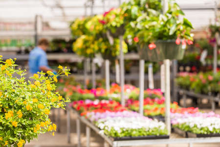 Abundance of colorful flowers at the garden center in Early Summer. Stock Photo