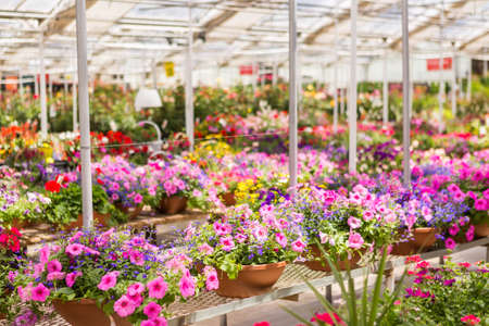 Abundance of colorful flowers at the garden center in Early Summer. Imagens