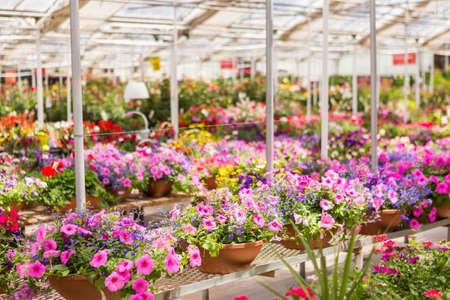 Overvloed van kleurrijke bloemen bij het tuincentrum in de vroege zomer. Stockfoto