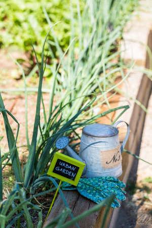 Small organic vegetable garden in urban agea. Stock Photo