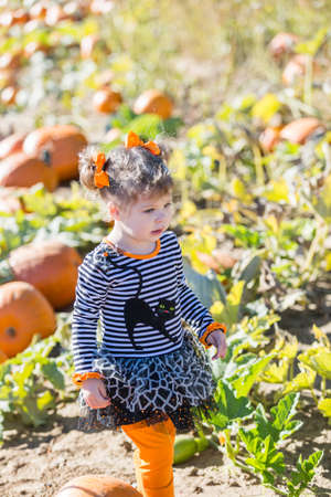 pumpkin patch: Cute toddler looking for perfect pumpkin at the pumpkin patch.