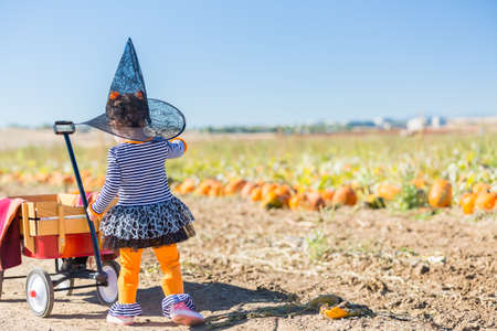 Cute toddler looking for perfect pumpkin at the pumpkin patch.