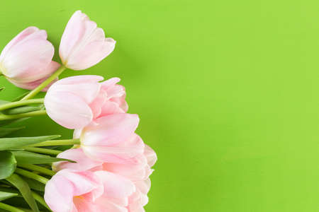 Pink tulips on a green background. Stock Photo
